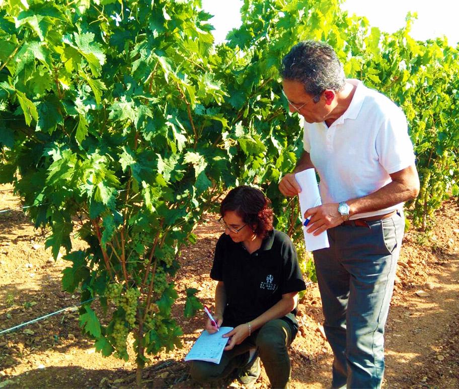 revisión del viñedo