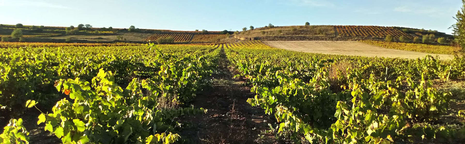 @nuestros_vinedos-slider_vinedo_crop-bodega_el_arca_de_noe